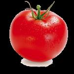 گوجه فرنگي صادراتي